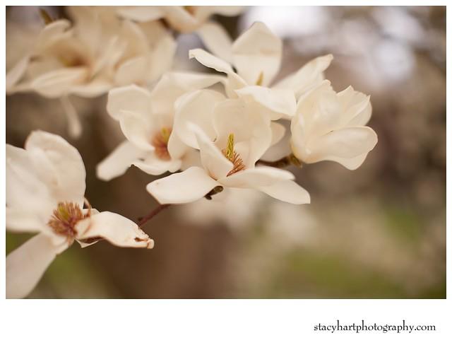 2012-03-26_009