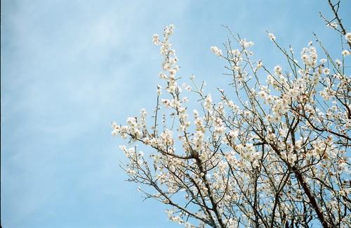 20120325妙典M3_Portra400_011