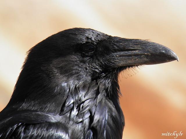 Raven 5