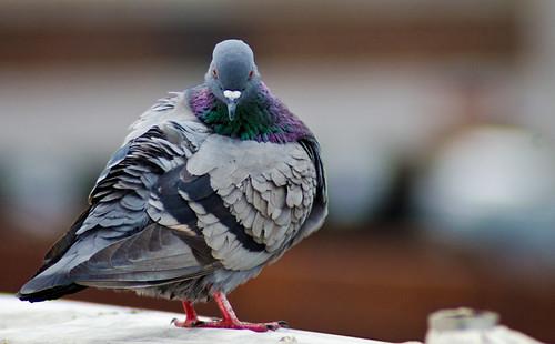 BirdTime