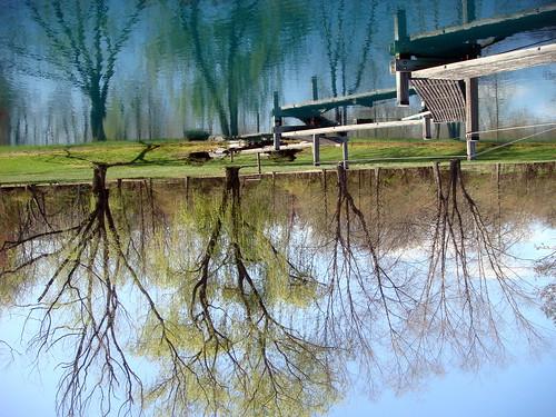 reflections upsidedown