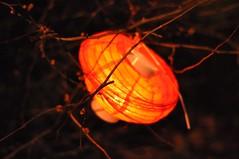 Discarded Lantern