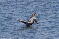 Pelican Skydive