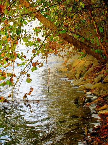 autumn mist color fall nature water leaves fog virginia rocks stauntonriver roanokeriver brookneal campbellcounty