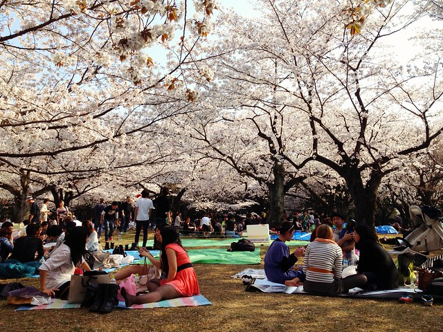 Yoyogi park hanami