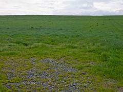Landscape Project 1-3.jpg
