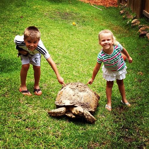 Texas-sized turtle
