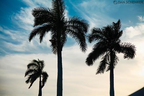 blue sunset sky tree eos florida grill palmtree 5d sarasota pointe tarpon bradenton markii tikibar tarponpointegrill