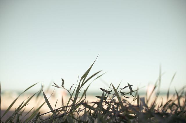 Grass Lake Sky