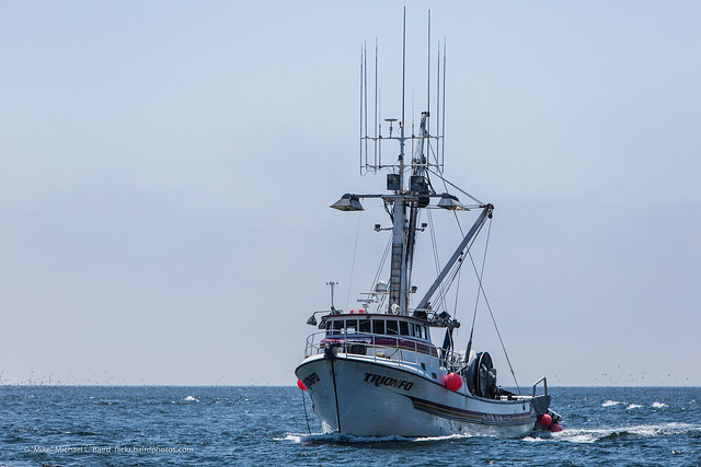 Commercial fishing vessel named trionfo morro bay ca for What is commercial fishing