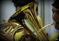 musician, yellow, tuba, music, euphonium, close-up, brass instrument, wind instrument,