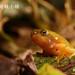 林建鳴_台北樹蛙小蛙