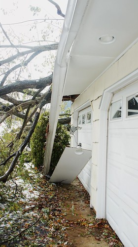 A Tree Falls on Our House