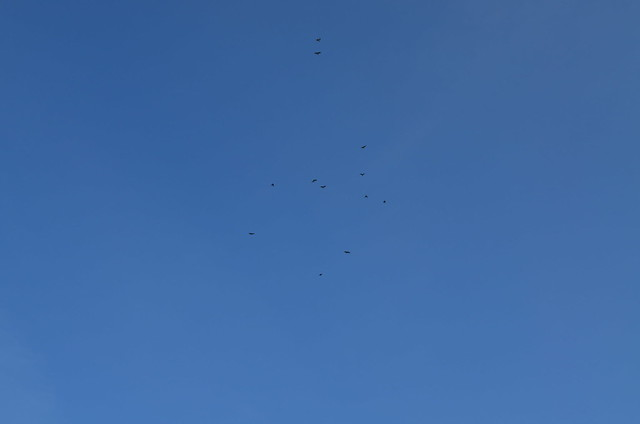Ahlbeck beach Germany_birds flying in the sky