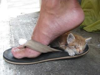 Tiny street cat