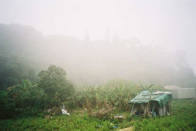 lamma farm