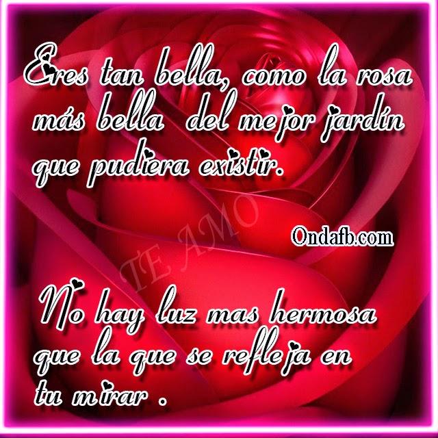 Bella Rosa De Amor Con Frases Y Verso De Amor Para Facebook A