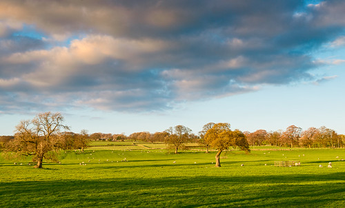 sunset england nature landscape spring nikon unitedkingdom dusk lambs weston d800 vividvista
