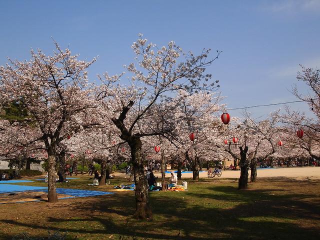 In Dougo Park4