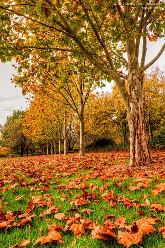 autumn leaves landscape australia nsw glaston