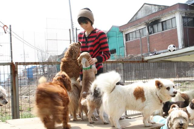 Korean Dog Rescue Uk