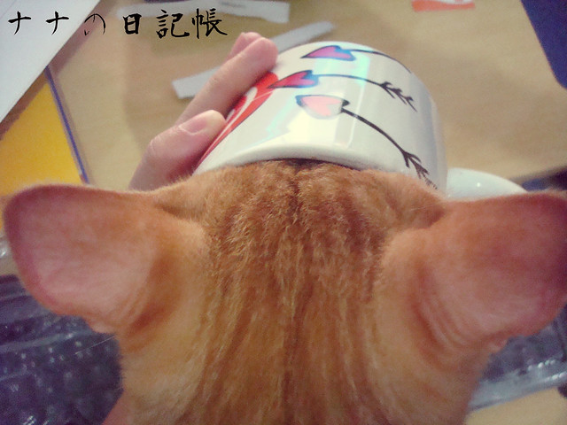 猫とコーヒーマグ - Neko to kōhīmagu