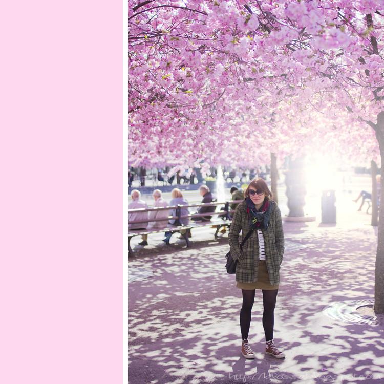 kungsträdgården körsbärsblom