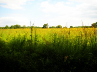 Fields of Gold, Willowwood! 2