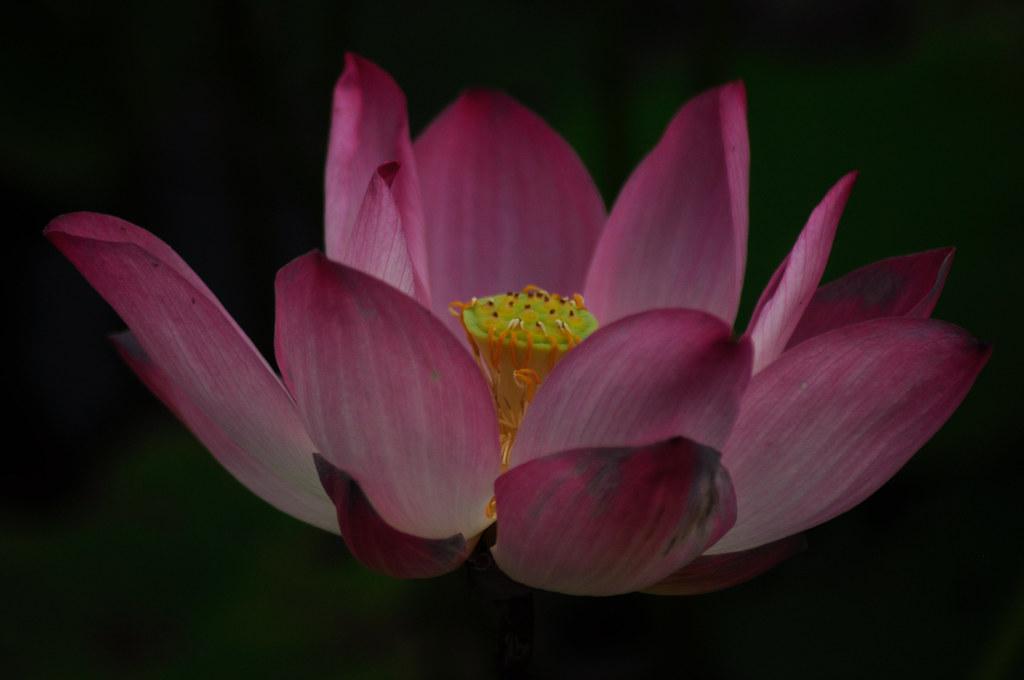 Kepong Metropolitan Lake Garden 甲洞大都会湖花园 ...