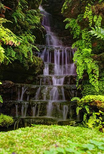 Waterfall Among Ferns by DisHippy