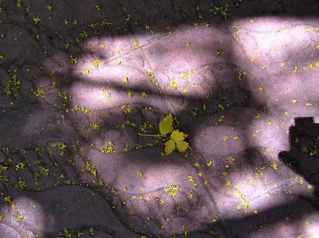 Encontradas hojas amarillas
