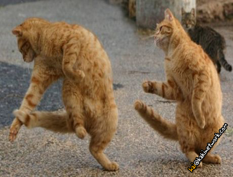 gambar kucing 15