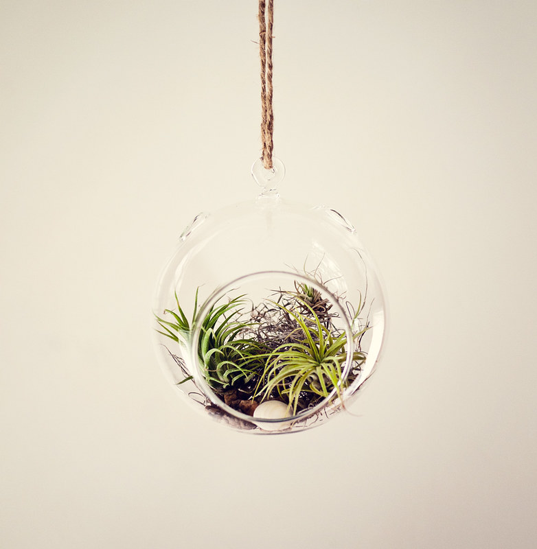DIY Air Plant Terrarium Ciera Design Studio
