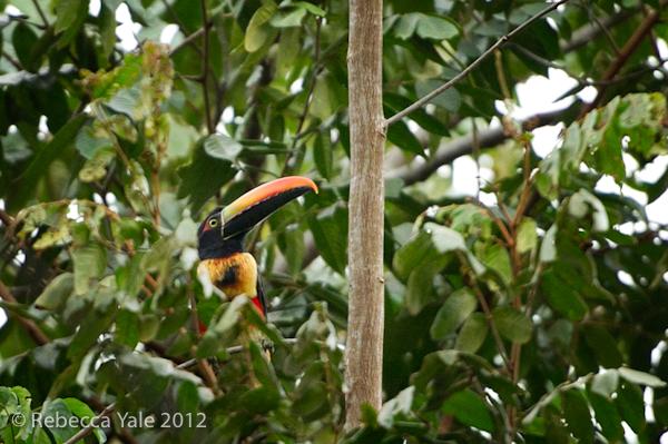 RYALE_Costa Rica_8