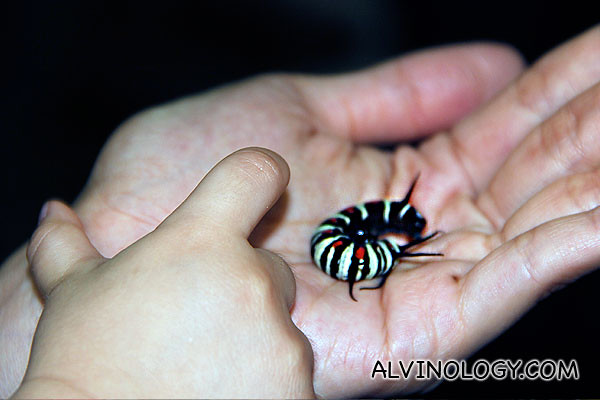 Baby hand stroking a caterpillar