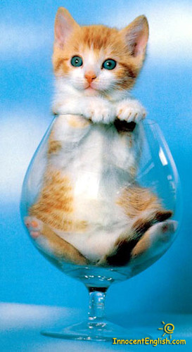 kitty in glass