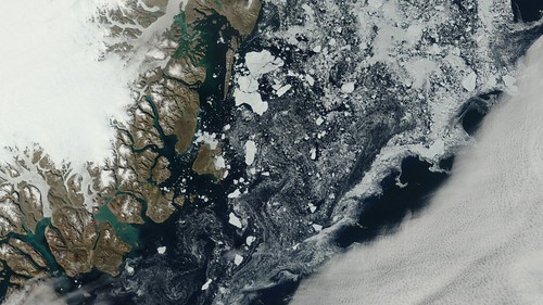 East Greenland Terra MODIS sea ice Aug. 17
