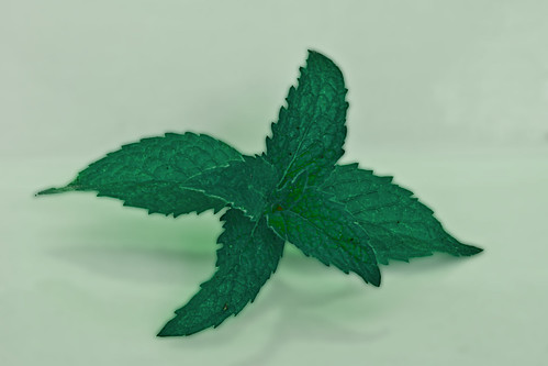 Mint, Petra Bensted, Creative Commons