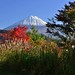 Mt Fuji in Autumn by magicflute002