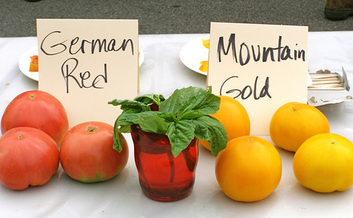 Mountain Tomatoes