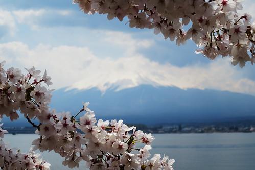 Fuji spring