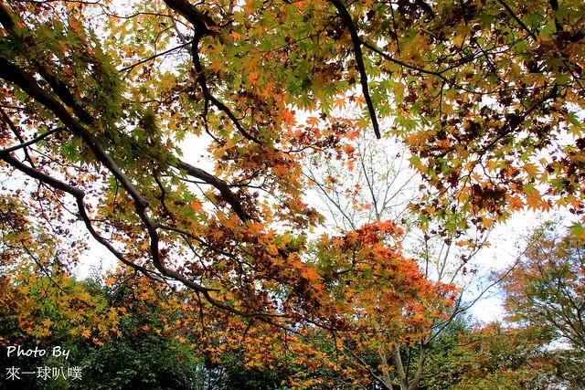嵐山公園25
