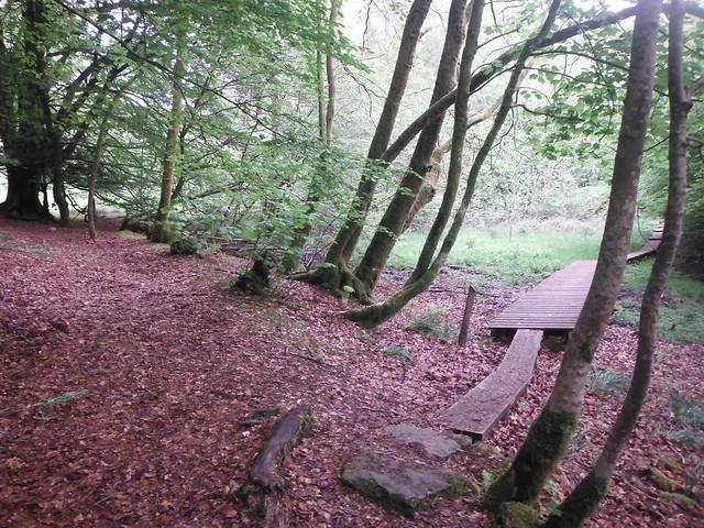 In the Woods 4, Fujifilm FinePix XP50