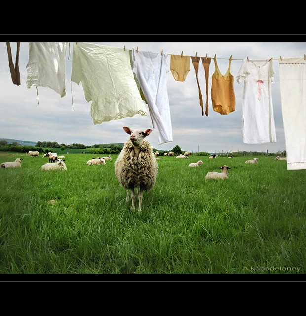 Laundry in Spring