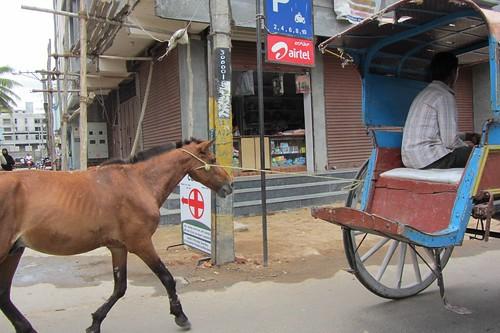 Cart  Before Horse