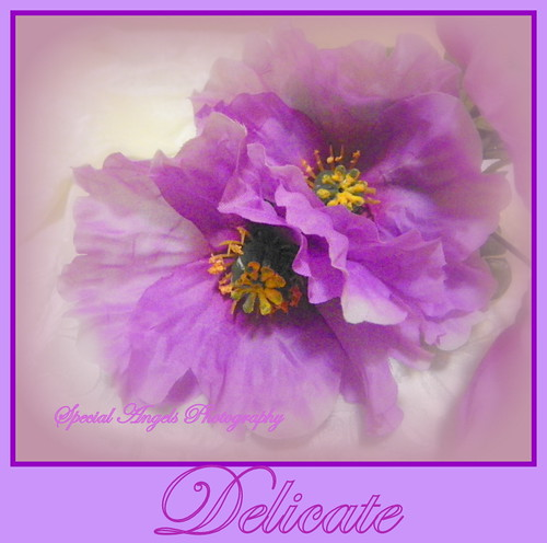 So Delicate--Happy Sunday by Special Angels Photography( Tumbleweed)