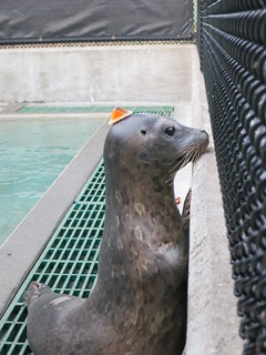 curious seal is curious