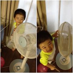 扇風機と戯れるとらちゃん (2012/7/9)