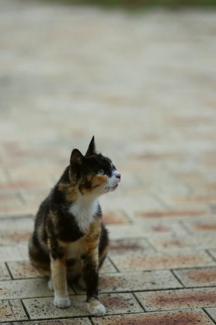 cat (70)