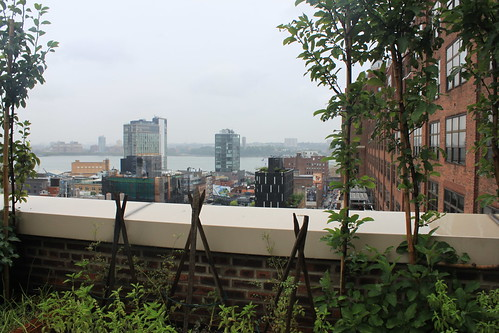 New York - Google - View From Terrace 2